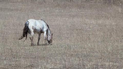 wild mare Stock Video Footage