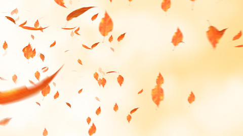 The leaf which flies in the sky Animation
