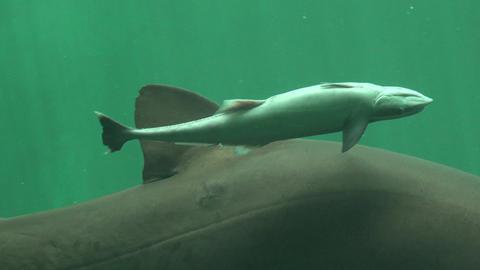 Baby Shark Marine Life Live Action