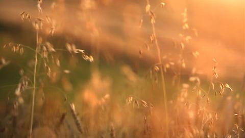 Village scenery. Harvest time Footage