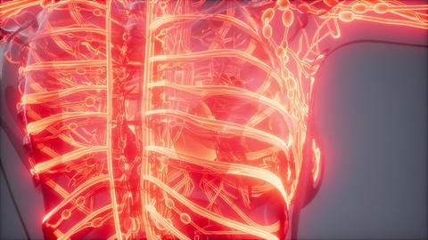 Blood Vessels of Human Body Live Action