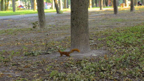 A Squirrel In The Park Live Action