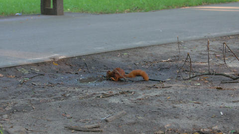 A Squirrel Drinks The Water Live Action