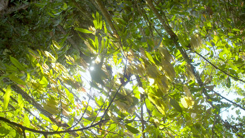 Amazon Rainforest Rotating Shot In Ecuador Live Action