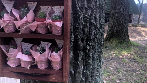 LVIV, UKRAINE - APRIL 14, 2019: A collection of small decorative cacti in a Live Action