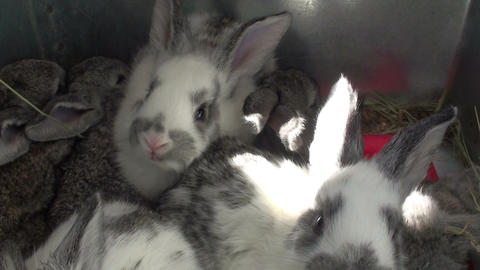 Small rabbits in the cage (1) Footage