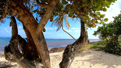 Trees and clear water in Autre Bord beach in Le Moule. Guadeloupe, Caribbean sea Live Action