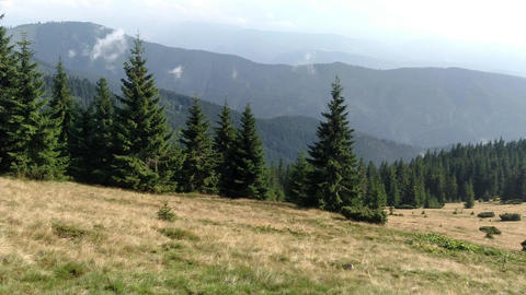 Slow motion of clouds Spruce mountains and sky Environment in sunny day ature in the Carpathians Live Action