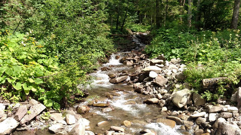 67Mountain river flowing near the green forest Travel in Carpathians of Ukraine Flowing water Live Action