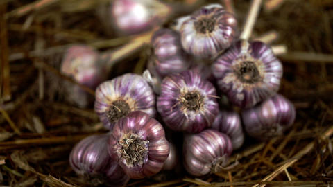 Close-up bunches of organic garlic on a marketplace. Whole bunch of fresh garlic Footage