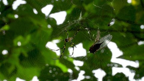 クモとクモの巣 ビデオ