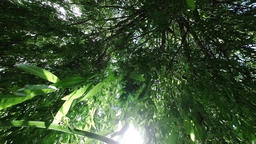 Looking upward through tree leaves in breeze of a weeping willow tree with the s Footage