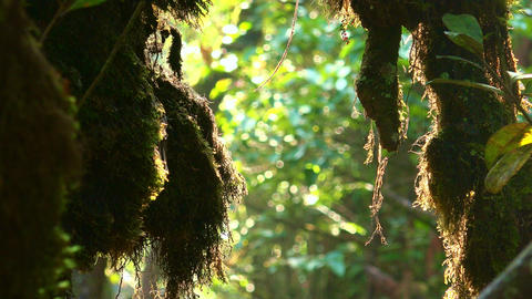 Close up video of fantasy mystical tropical mossy forest with jungle plants Footage