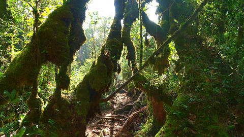 Fantasy mystical tropical mossy forest with amazing jungle plants and flowers Footage