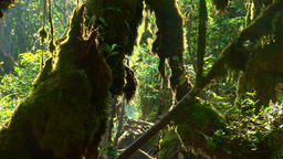 Zooming out video of fantasy mystical tropical mossy forest with jungle plants Footage