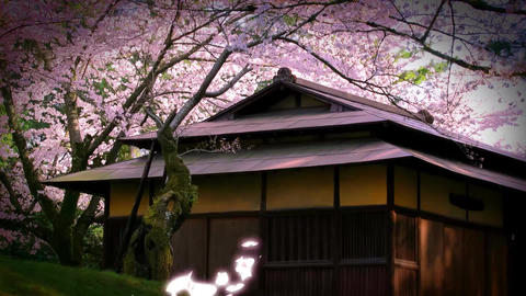 Sakura slide After Effects Template