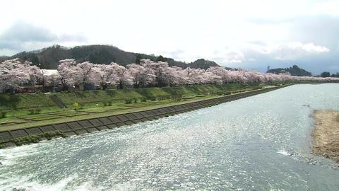 角館町 桜 Footage
