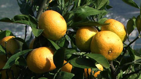 Orange field Footage