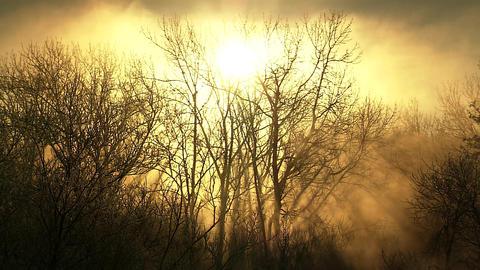 釧路湿原 木々 霧 Footage