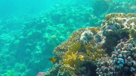 Coral reefs Footage
