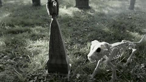 Halloween. Witch loves dog skeleton Live Action