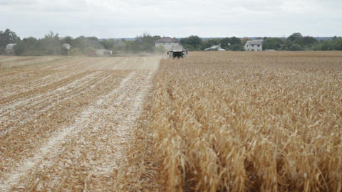 Maize grain harvester to gather corn on farmfield Footage