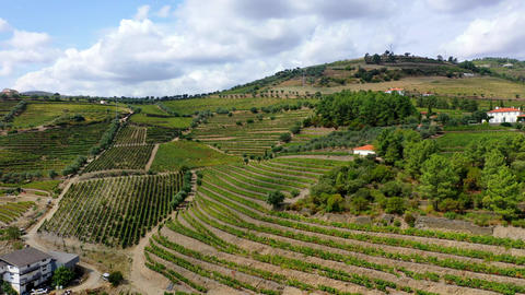 Flight over Douro valley in Portugal with its famous vineyards Footage