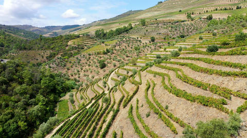 The vineyards of Douro Valley in Portugal - the land of famous port wine Footage