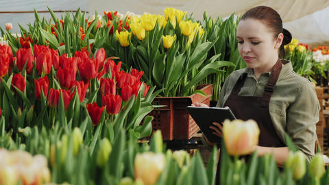 Mid adult woman working with a digital tablet in a greenhouse Live Action