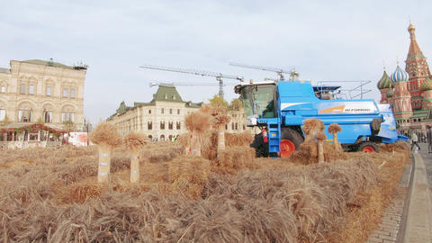 Wheat and combine harvester on Red Square Live Action