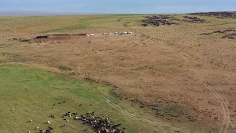 Aerial of grazing herds on pastures and yurts Footage