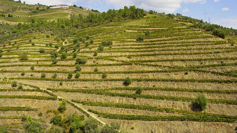 The amazing landscape of Douro Valley in Portugal with its famous vineyards Footage