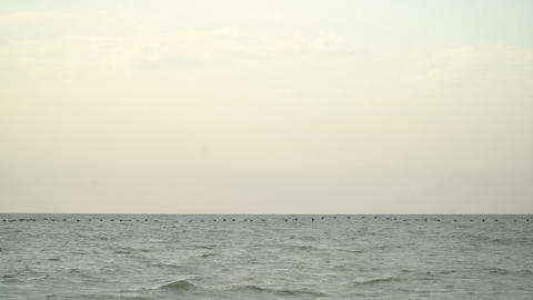 Many birds are flying just above the surface of the sea, cloudy weather Live Action