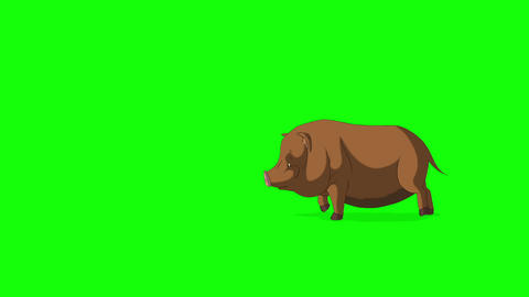 Brown Little Pig Runs Chroma Key Videos animados