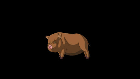 Brown Little Pig Runs with a Stop Alpha Matte Animation