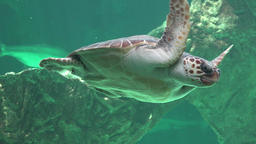 Reptiles And Sea Turtles Footage
