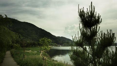 Lake Kawaguchi dusk pine tree Footage