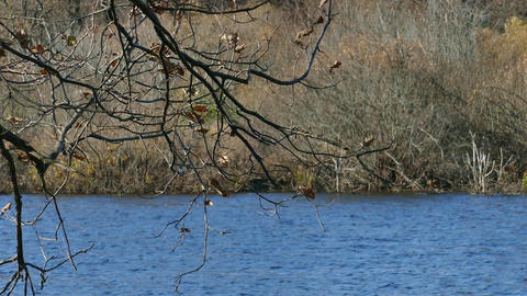 branches of oak over the autumn lake Footage