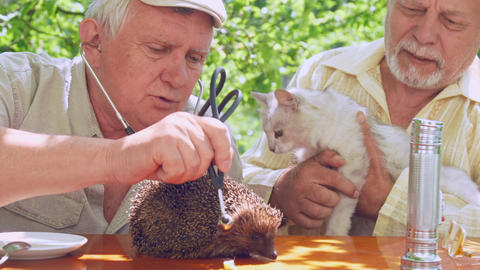 eldery person examines hedgehog near aged man with cat Footage