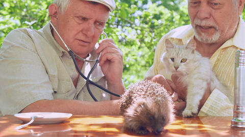 retired person with white cat in hand catches hedgehog Footage