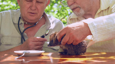 aged people communicate and show hedgehog plate with milk Footage