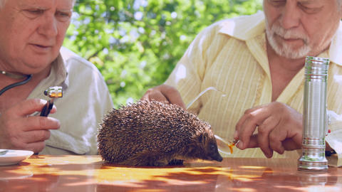 aged man looks at hedgehog through spectacles at table Live Action