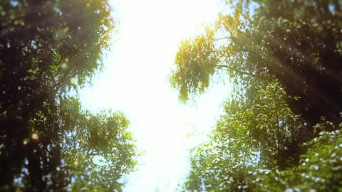 Enchanted Eerie Trees - 3 Animation