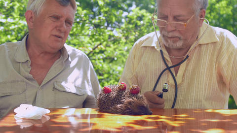 aged people with medical equipment consider hedgehog health Footage