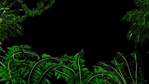 Edge of Jungle Animation