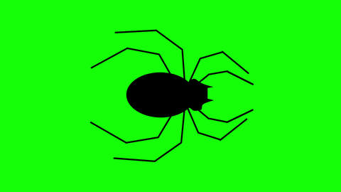 Halloween Spider walking against a green background. Seamless loop Animation