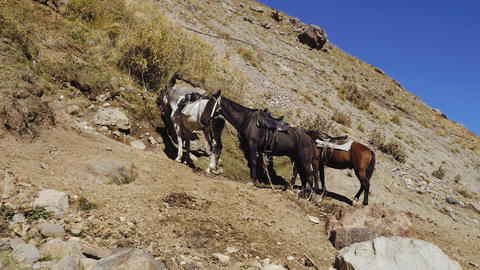 Horses with saddle standing alone Live Action
