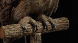 Close up of the claws of a big owl sitting on a branch Live Action