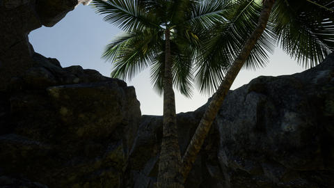 Big Palms in Stone Cave with Rays of Sunlight Footage