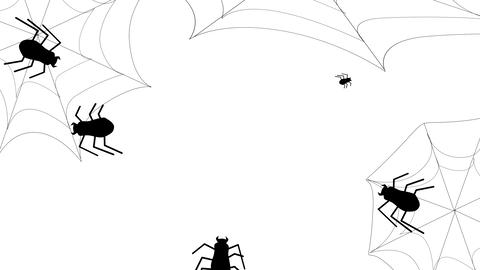 Halloween Spider and Web animation on a white background. Flat style animation background Animation